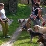 payarin dog trekking