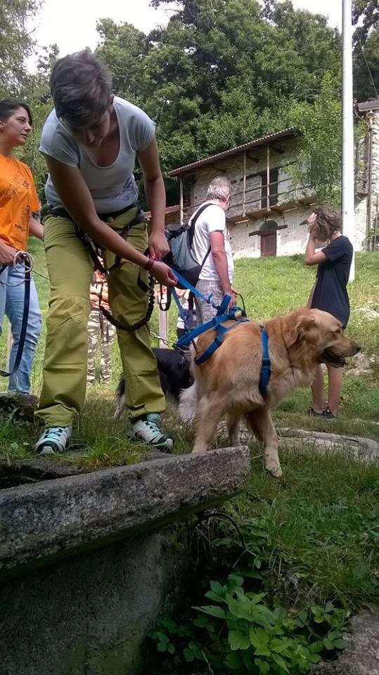 dog-trekking-2